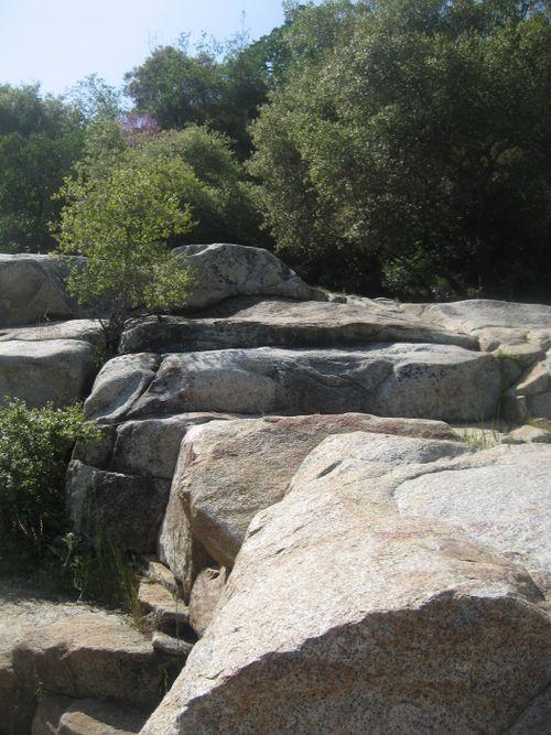 Sequoias 3-09 048