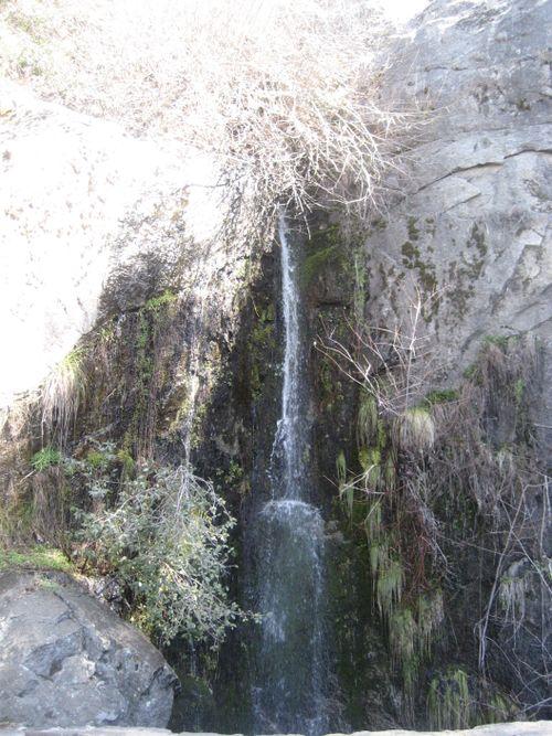 Sequoias 3-09 002