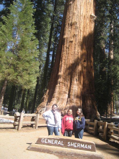Sequoias 3-09 010