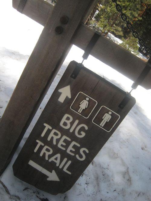 Sequoias 3-09 019